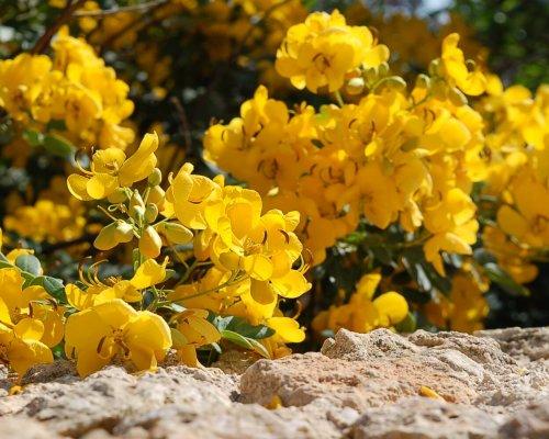 flowers Gozo